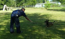 Dog Training - Hattiesburg, MS - K-9 Evolution LLC - dogs