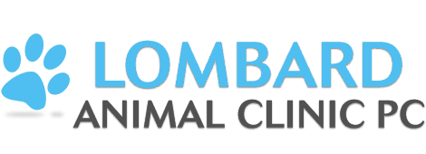 Veterinary Services | Lombard, IL | Lombard Animal Clinic PC | 630-627-4788