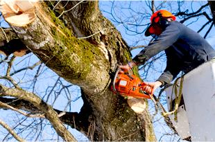 Hazardous Tree Removal | Crestline, CA | Domon Construction & Tree Service | 909-338-3700