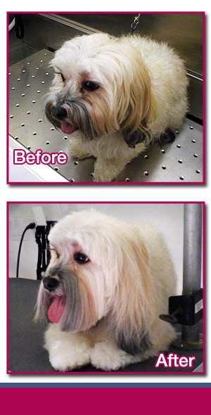 Certified Dog Grooming - Nassau County, NY - Luv'n Pooches & Pals