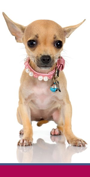 Luv'n Pooches & Pals - Certified Pet Grooming - Nassau County, NY
