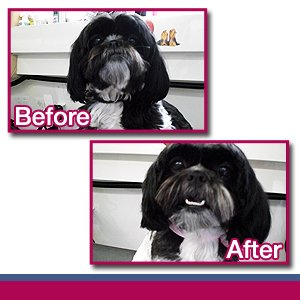 Portable Dog Groomer - Nassau County, NY - Luv'n Pooches & Pals