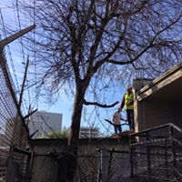 Industrial Tree Removal