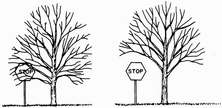 Tree Trimming Services Pruning Program Magnolia Tx