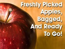 Fruits And Vegetables - Muncy, PA  - Webster's Apple Orchard