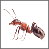 Ant Infestation Treatment