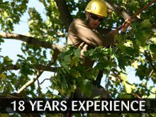 Tree Service - Byron, MN - Logan's Tree Service - tree trimming - 18 Years Experience