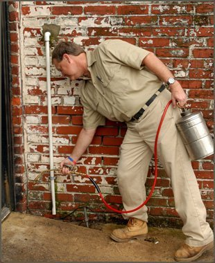 fleas | La Grange , KY | Cooper Termite and Pest Control | 502-222-1320