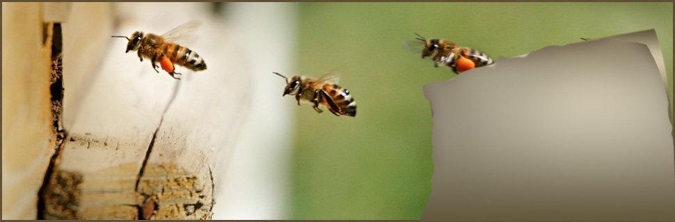 bees | La Grange , KY | Cooper Termite and Pest Control | 502-222-1320