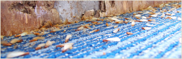termites | La Grange , KY | Cooper Termite and Pest Control | 502-222-1320