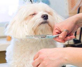 Full grooming