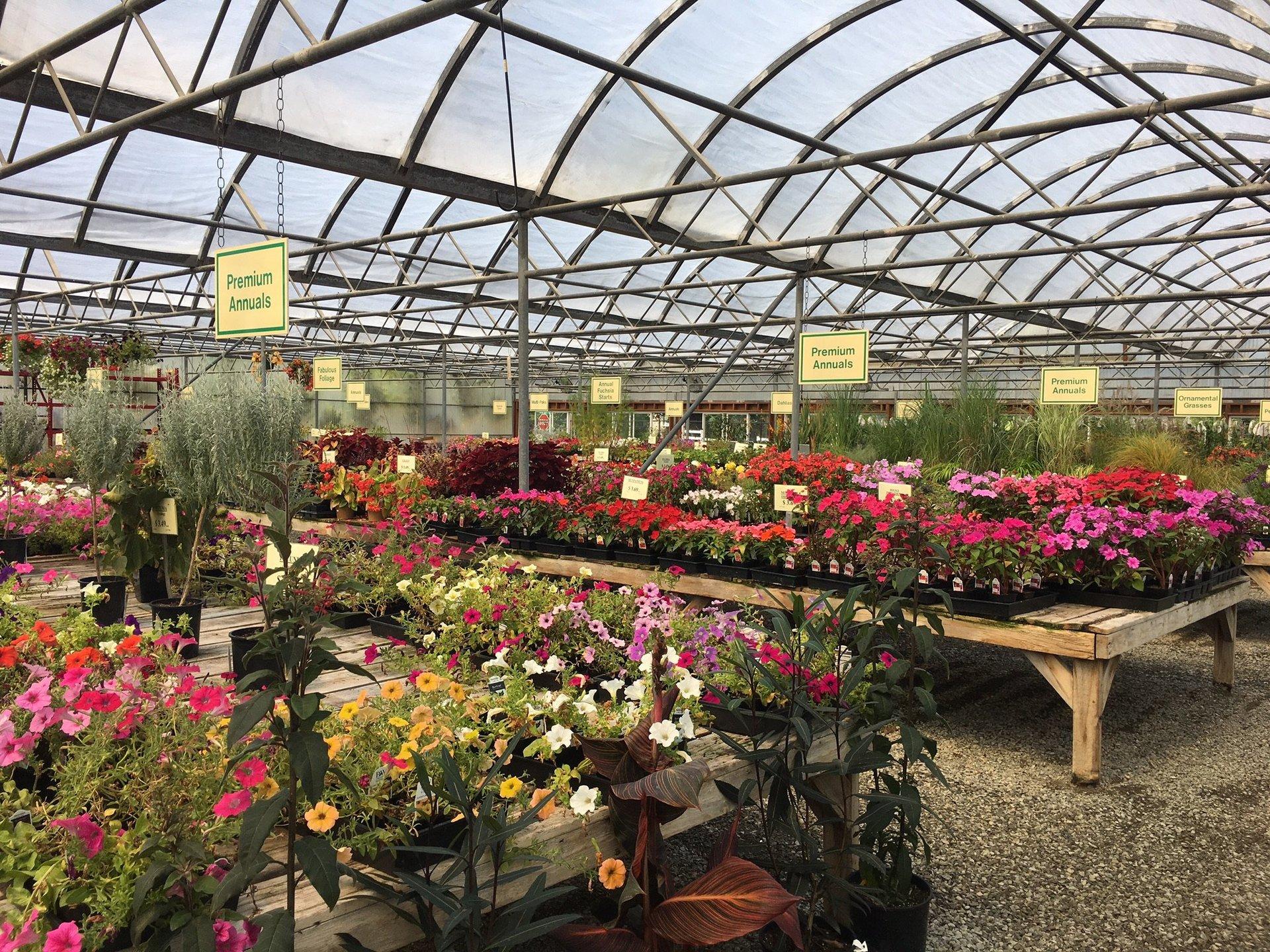 Edgewood Nursery & Garden | Trees | Edgewood, WA