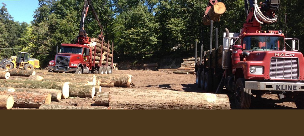 Timber Buyer Auburn Alabama,