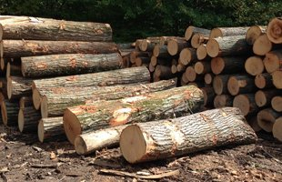 Timber Buyer | Douglassville, PA | Gift Lumber Co Inc | 855-229-3710