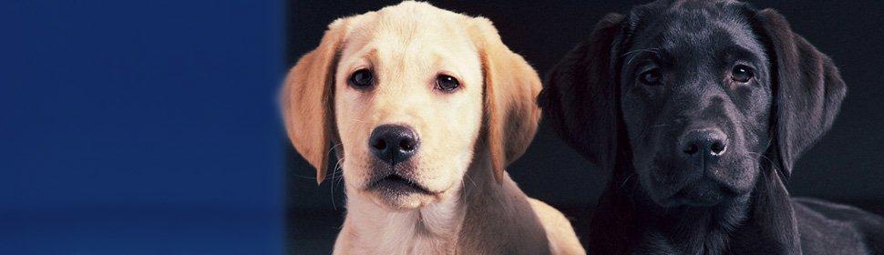 Animal Clinic | Southlake, TX | Lake Cities Animal Clinic | 817-481-4590