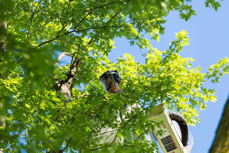 Pella Tree Service Inc. | Tree Care | Lynnville, IA