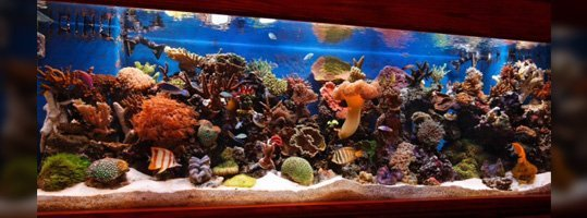 Custom Aquarium Cabinets Naples Fl