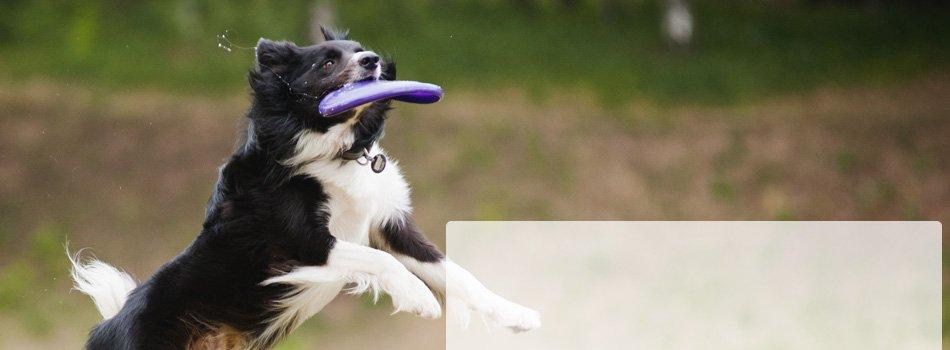 Dog Products | Hartford, WI | Birds On Deck LLC | 262-670-5988