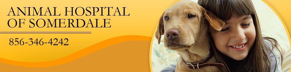Animal Hospital - Somerdale, NJ - Animal Hospital Of Somerdale