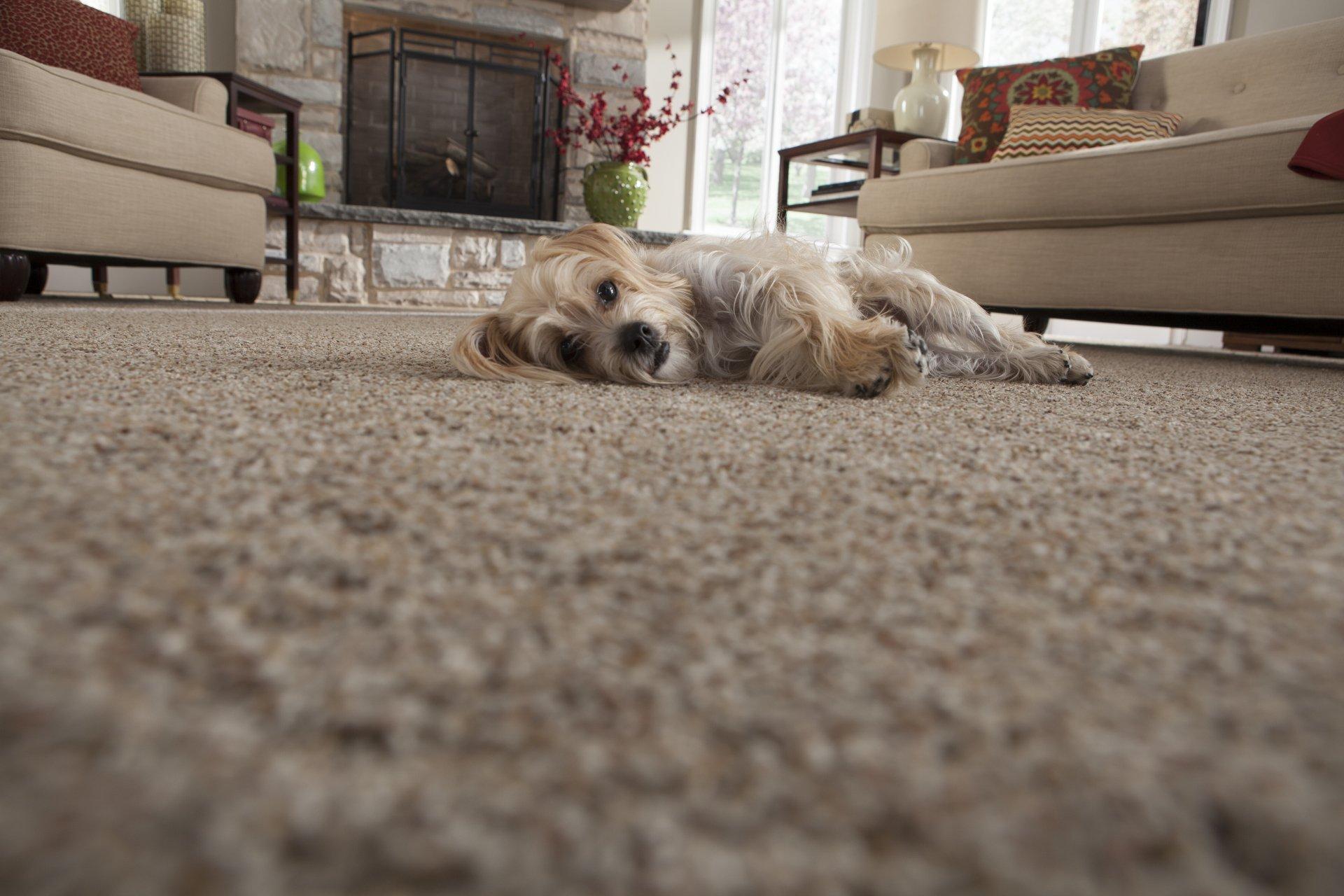 Carpeting Remnant Sales Carpet Pieces Manitowoc Wi