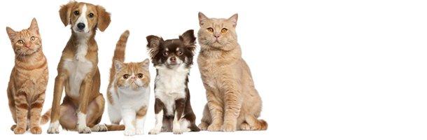 Flea Prevention | Jonesboro, AR | Woodsprings Animal Clinic | 870-933-7077