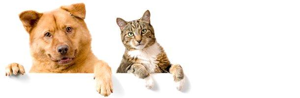 Puppy Shots | Jonesboro, AR | Woodsprings Animal Clinic | 870-933-7077