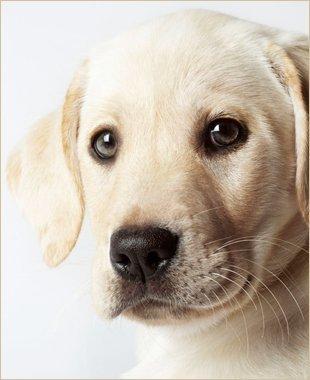 Heartworm Treatment | Jonesboro, AR | Woodsprings Animal Clinic | 870-933-7077