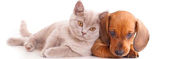 Feline Leukemia | Jonesboro, AR | Woodsprings Animal Clinic | 870-933-7077