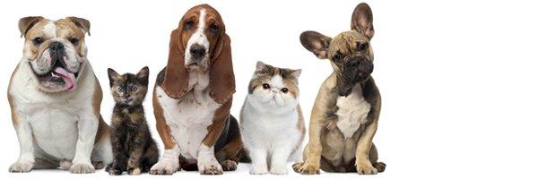 Cat Declaws | Jonesboro, AR | Woodsprings Animal Clinic | 870-933-7077