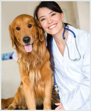 A veterinarian with a dog