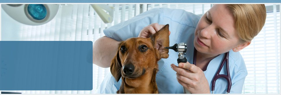 A veterinarian doing checkup to a dog