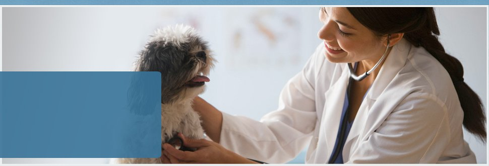 A veterinarian using stethoscope to a dog