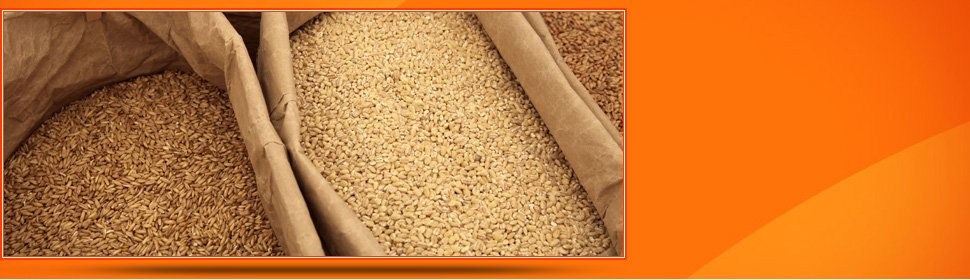 Grain Sales | Gonzales, TX | Fehner & Son Grain Co. LP | 830-672-3710