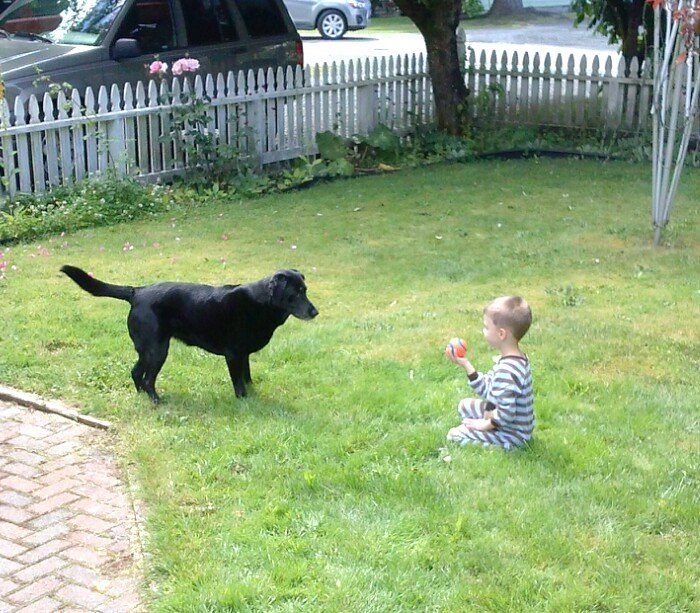 Dog play with Child