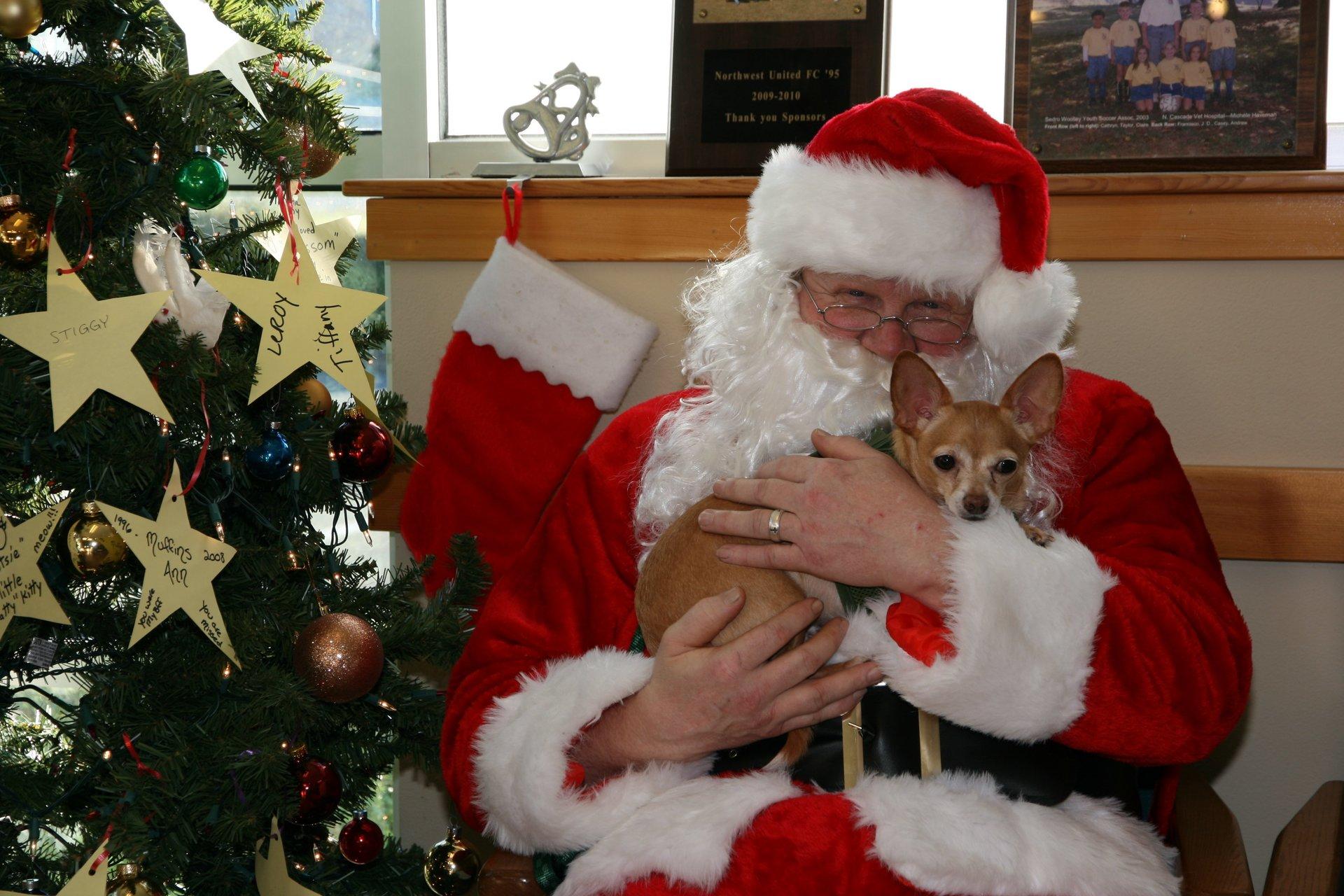 Dog and Santa