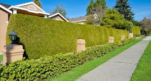 Hedge Installations