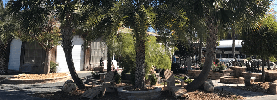 Palm trees with chairs