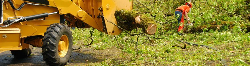 Chris Heller Tree Service  | Land and Brushing Clearing | Cleanup | Bellevue, NE