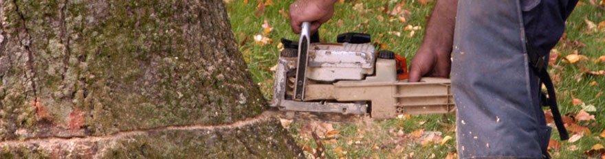 Tree Removal   Branch Removal   Bellevue, NE
