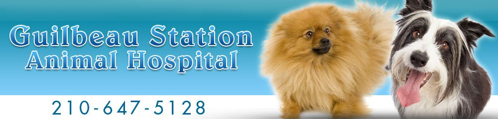 Veterinary Hospital San Antonio, TX - Guilbeau Station Animal Hospital