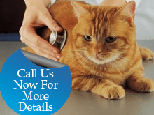 Veterinary Hospital - San Antonio, TX - Guilbeau Station Animal Hospital