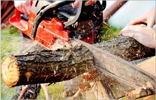 Cutting a tree branch with a chainsaw