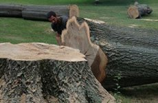 Stump Work | Wildersville, TN | G & H Tree Service | 731-234-1849