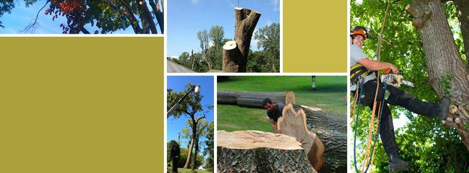 Tree Trimming | Wildersville, TN | G & H Tree Service | 731-234-1849