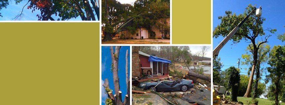 Landscape Contractors | Wildersville, TN | G & H Tree Service | 731-234-1849