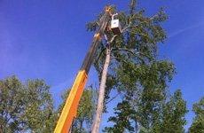 Tree Cutting | Wildersville, TN | G & H Tree Service | 731-234-1849