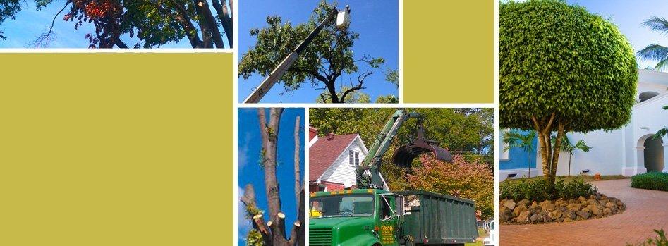 Residential Tree Services | Wildersville, TN | G & H Tree Service | 731-234-1849