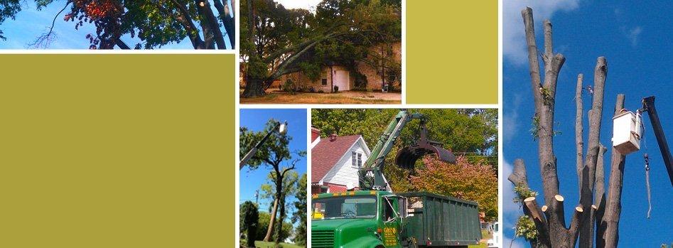 Tree Removal | Wildersville, TN | G & H Tree Service | 731-234-1849
