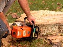 Tree Service - Superior, NE - Crowl Tree Service Inc - Tree removal