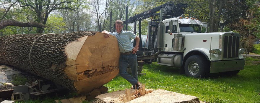 Tree Harvesting Timber Management Cochranton PA